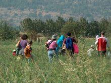 Guvernul taie finantarea de 5 mil. euro pentru proprietarii de paduri