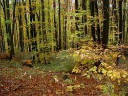 La sfâr?itul acestui an va fi realizat inventarul întregului fond forestier din România