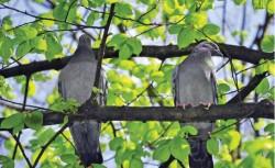 Numărul de păsări a scăzut odată cu cel al insectelor cu care acestea se hrăneau