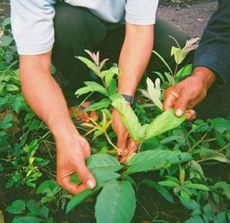 Fermierii practicanti de agricultura bio, primesc subventii din toamna