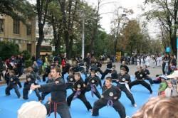 Săptămâna Mobilităţii Europene sărbătorită la Satu Mare