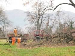 Salubritatea curata copacii