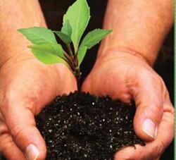 Haideti sa plantam la Belciugatele, sambata 20 noiembrie!
