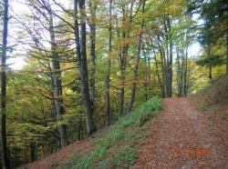 In 2013, Romsilva a regenerat 15 mii de hectare de padure