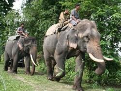 Popula?ia de elefan?i africani de p?dure a sc?zut cu 62% în Africa central?, în doar zece ani