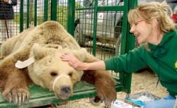 În rezervaţie trăiiesc în prezent 53 de urşi