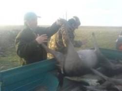 Noua lege a vânătorii, contestată de AGVPS