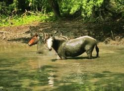 2.500 de cai salbatici, ajutati  sa nu moara de foame