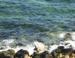 Senatorii au adoptat proiectul de lege privind protejarea mediului marin