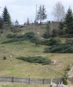 RNP semnaleaza retrocedarea ilegala a 162.000 de hectare de padure in judetul Suceava