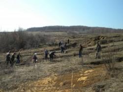Peste 70 de hectare impadurite