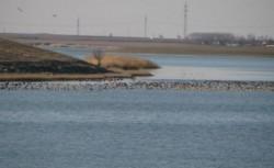Comisia Europeană propune un plan de acțiune pentru protejarea păsărilor marine