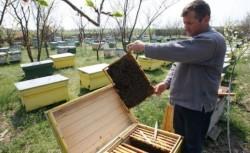 Mierea poate vindeca infectiile
