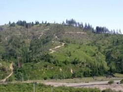"Jaf in Padis: ""Tun"" de peste 1,5 milioane de lei prin defrisari ilegale in Parcul Natural Apuseni"