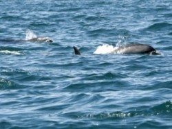 Peste 100 de delfini mor?i