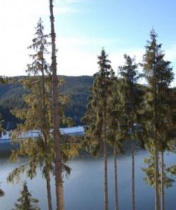 Ecologizare in zona Tarnita