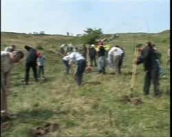 Direcţia Silvică Hunedoara va împăduri peste 200 de hectare