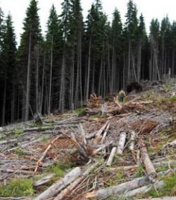 Dezastru ecologic si turistic in nordul Valcii