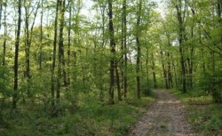 """Asociatia Administratorilor de Paduri din Romania: Fondurile europene dedicate silviculturii, """"o batjocura"""""""