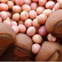 Agricultorii risca sanctiuni daca insamanteaza soia modificata genetic