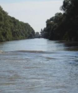 Elevi din toate judeţele dunărene participă la o acţiune de ecologizare a fluviului