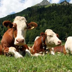 Suedia recomanda Uniunii Europene sa introduca o taxa pe carne