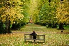 Senat: Copacii sanatosi din spatiile verzi - taiati numai cu avizul Agentiei pentru Protectia Mediului