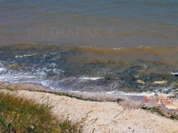 Tragedie ecologică: 1300 de păsări moarte pe plajă