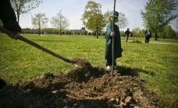 Tineri din 7 ??ri europene au participat la o ac?iune de plantare de arbori în Vatra Dornei