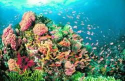Australia: Mediul marin este grav afectat de încălzire