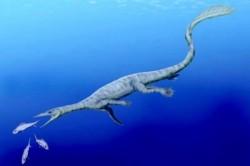 Scheletul unui thalattosaur a fost descoperit în Alaska în timpul refluxului. Cum arăta reptila marină preistorică