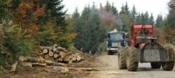 Defri??ri ilegale în Vâlcea. Localnicii lupt? cu Facebook împotriva ho?ilor de lemn