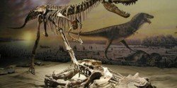 Dinozaurii au dispărut din cauza unei schimbări climatice bruşte