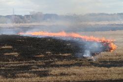 Arderea vegetatiei uscate, eroare de fermier incepator