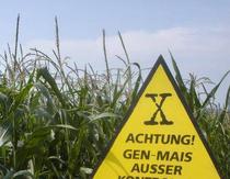 Cultivatorii de plante modificate genetic trebuie să se înregistreze.