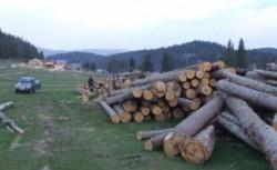 Greenpeace: Ministerul Mediului efectueaza un control la APM Covasna