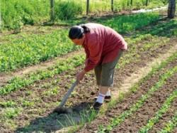 40 de fermieri vasluieni au adoptat agricultura ecologica