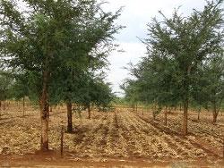 Cartea Alba a Agriculturii – 29 de propuneri pentru o agricultura moderna si durabila