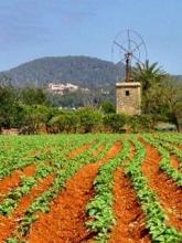 Agricultura ecologica va beneficia, in urmatorii 7 ani, de peste 200 mil. euro fonduri europene