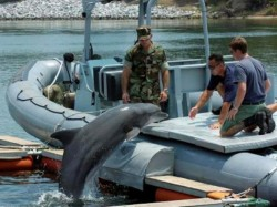 "Mare Nostrum continua campania ""Adopta un delfin"""