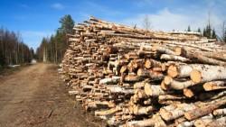 Raport privind mafia lemnului din jud. Harghita