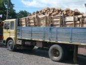 Furturile masive de lemne continu? nestingherite - Codru-i frate cu punga?ul