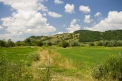 Proprietarii p?durilor din situl Natura 2000 vor primi compensa?ii