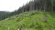 Ministrul Lucia Varga a anuntat ca noul cod silvic va fi mult mai sever
