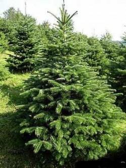 La Cenad, o pădure întreagă apare doar în acte