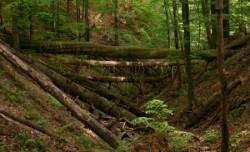 Ocolul Silvic Baia Mare doreste infiintarea unui parc natural de peste 20.000 hectare pe Valea Firizei
