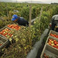 Sprijinul pe suprafata pentru fermierii din agricultura ecologica ar putea creste la 600 euro/ha din 2014