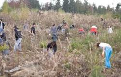 Direcţia Silvică Suceava inspectează terenurile împădurite în acest an