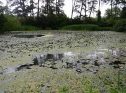 Concluziile comisiei care a verificat situa?ia Lacului cu nuferi din Rezerva?ia natural? Lacul Pe?ea - Omul a stricat echilibrul
