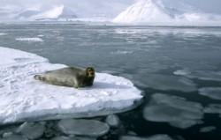 Rusii au impiedicat un vas cu activisti Greenpeace sa intre in zona arctica pentru a protesta impotriva forarilor pentru petrol ale companiilor Rosneft si Exxon Mobil